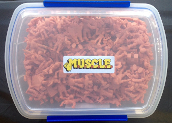 Complete Flesh MUSCLE Set